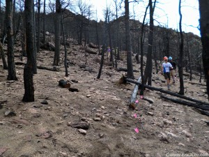 Our work zone for the day, cutting a new switchback through the burn zone.