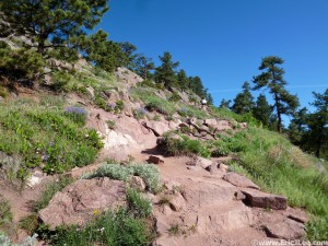 Beautiful day on the Mt Sanitas trail, somewhere in the middle of a 6 lap adventure, 5/25/13.
