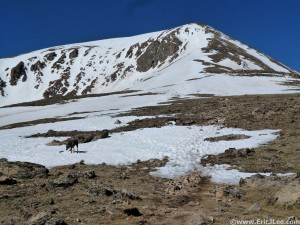 Looking up at the false summit of Mt Elbert, from around 13k, 6/23/13.