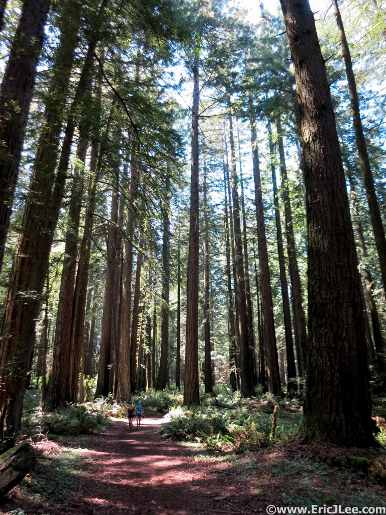 Running through the redwoods on a beautifully sunny California day.