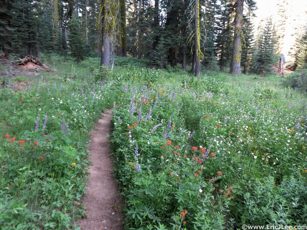 Between the view points the trails weren't so bad. Even in a drought year the flowers bloom.